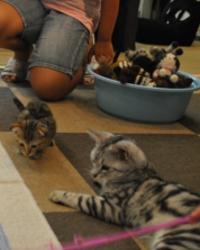 Falta de tempo, de espaço e custos altos dificultam a criação de um pet dentro de casa