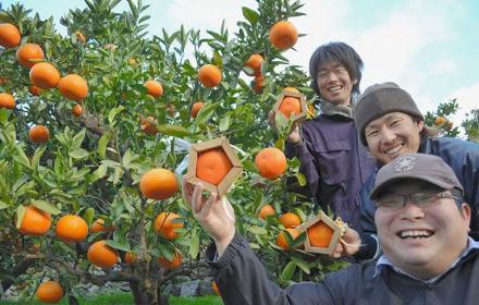 Agricultores da província de Ehime desenvolveram o formato especial para as laranjas com moldes