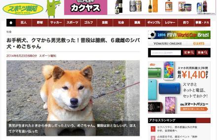 Mego é um cão da raça shiba