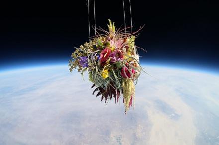Projeto de Makoto Azuma Exobiotanica - Botanical Space Flight