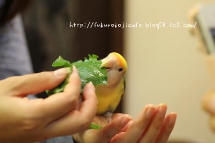 Fukuro Koji Café recebe visitantes que gostam de pássaros