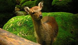 Yakushima, um paraíso preservado