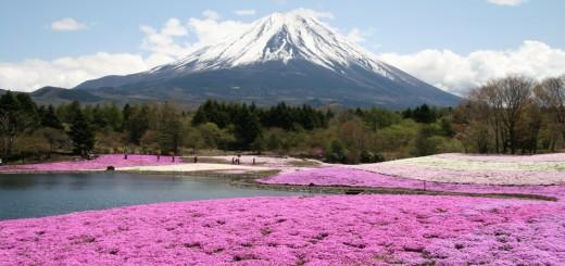 Vista do Festival Fuji Shibazakura, que acontece de abril a maio, em Yamanashi