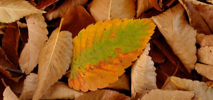 Os tons coloridos do outono no Japão