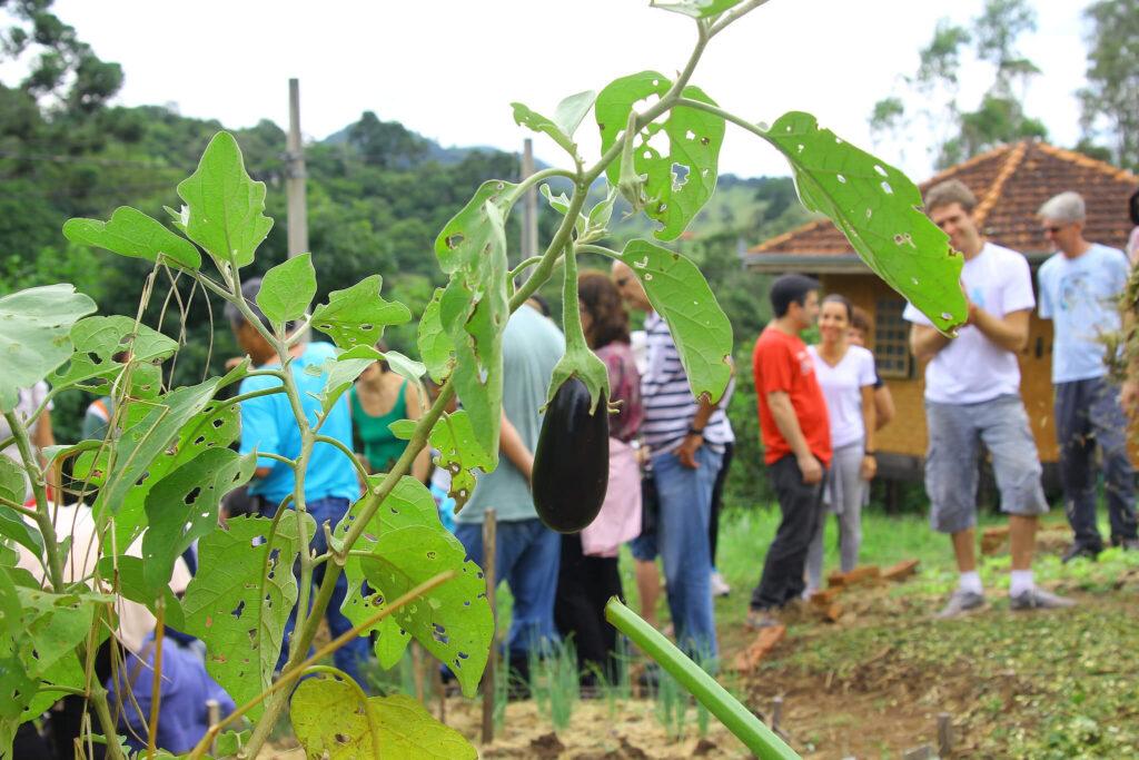Os participantes vão aprender a fazer composto orgânico, preparar a terra, plantar corretamente e fazer inseticidas naturais