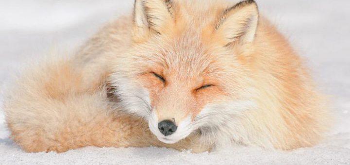 #MadeIndica - 5 animais fofos de Hokkaido
