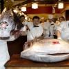 Atum bluefin é vendido por R$ 166 mil em leilão