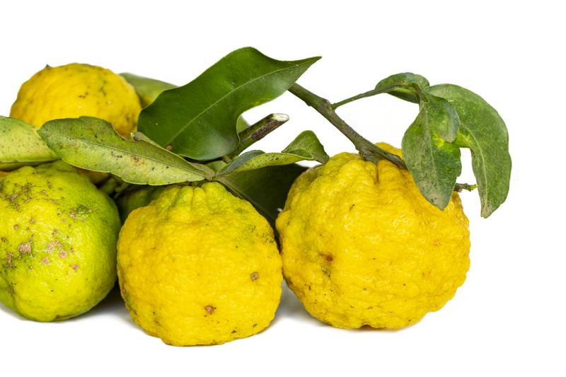 Yuzu, a fruta cítrica asiática