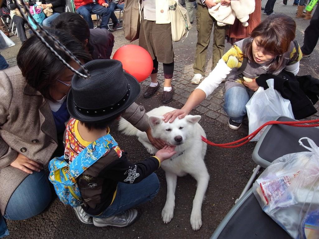Pessoas acariciam cão da raça akita em parque no Japão