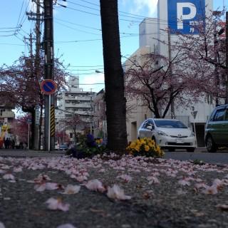 Foto: Karin Kimura