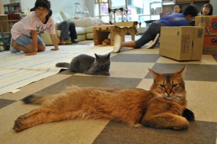 Ron Ron Cafe, em Matsuyama, oferece espaço para fãs de gatos