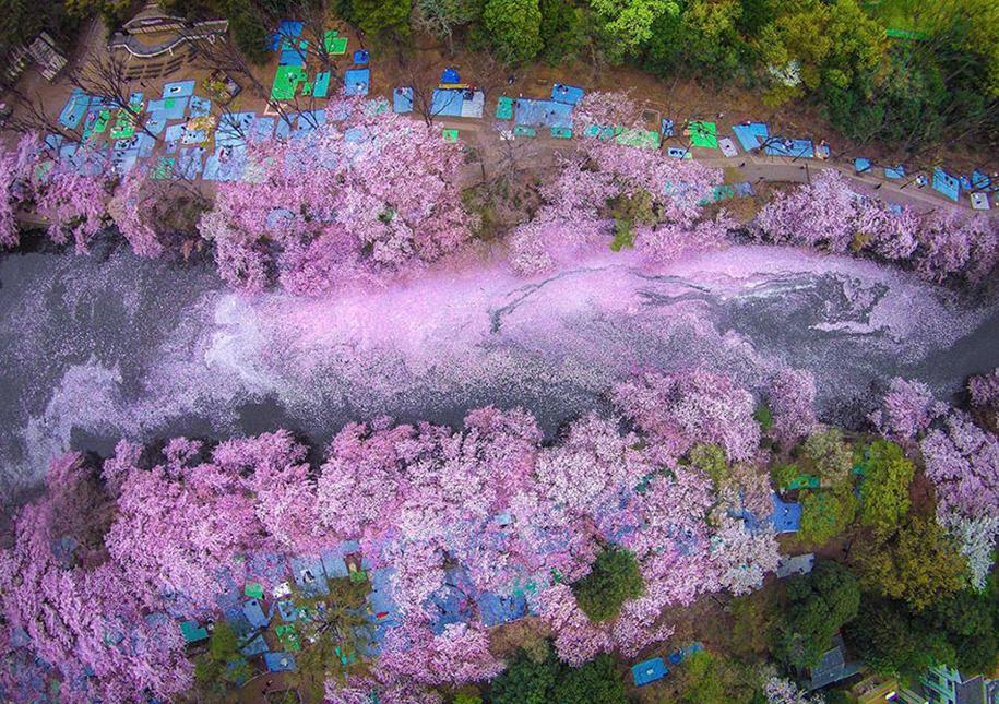 Foto de Danilo Dungo no Parque Inokashira, em Tokyo