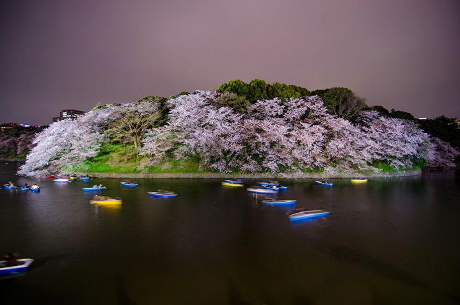 Foto de Totomai Martinez no Parque Chidorigafuchi, Tokyo
