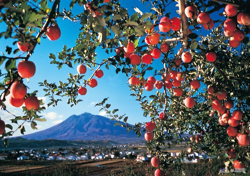 macieiras Monte Iwaki Aomori