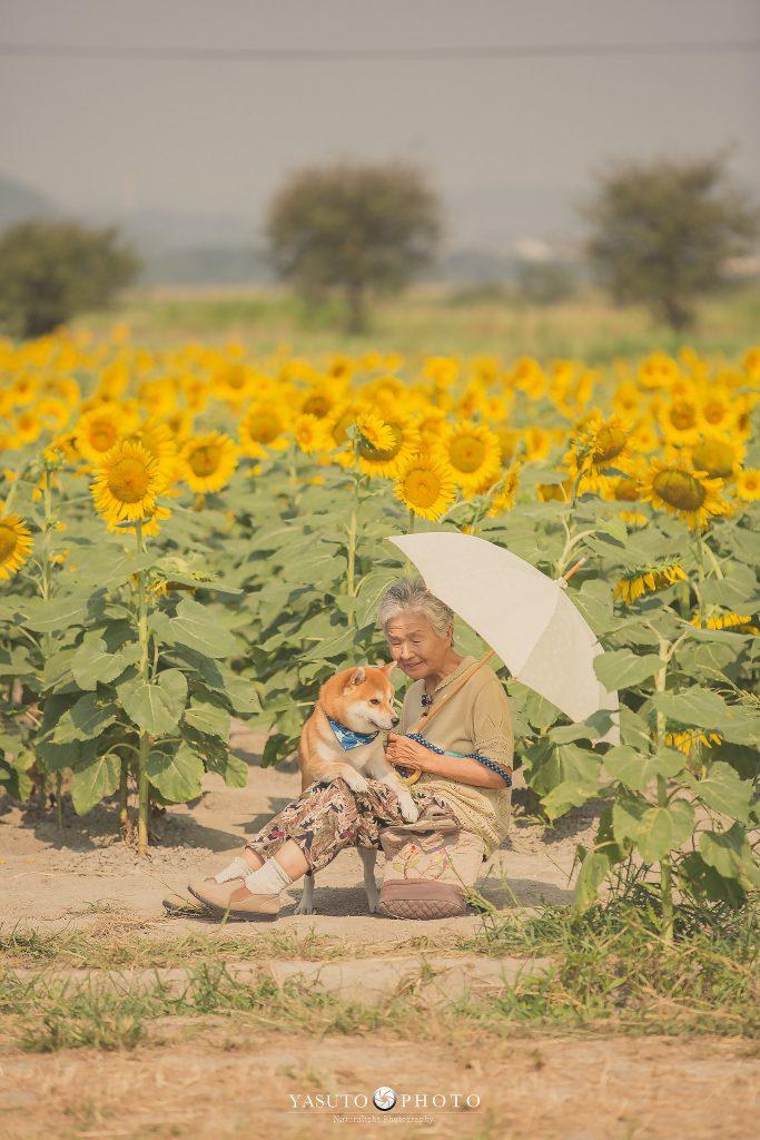 avó com cão shiba yasuto photo